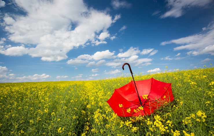 field with red umbrella, focus on umbrella