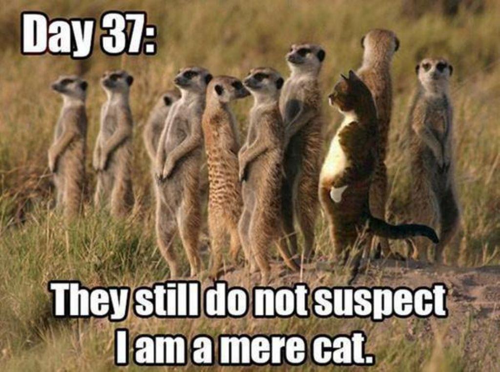 Mere Cat.jpg