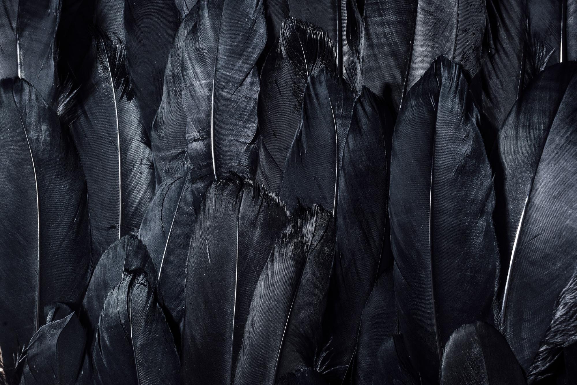 black feathers.jpg