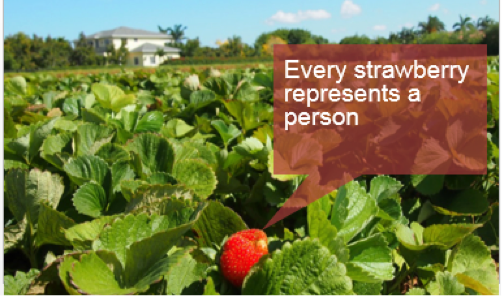 every strawberry represents a person.png
