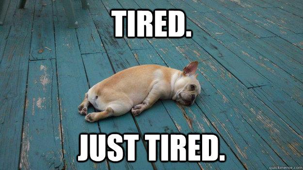 tired-frenchie.jpg