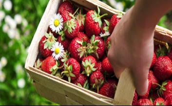 strawberries in basket.png