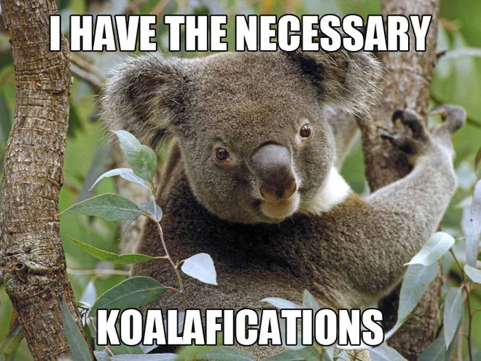 necessary koalafications.jpg